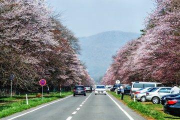 Hokkaido's Shizunai Nijukken Road