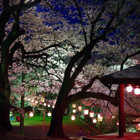 Sakura Season at Eboshiyama Park