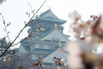 5 of Japan's Best Castles for Sakura-viewing