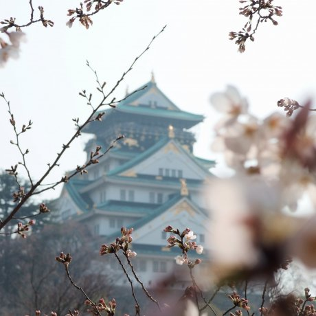 5 of Japan's Best Castles for Sakura-viewing