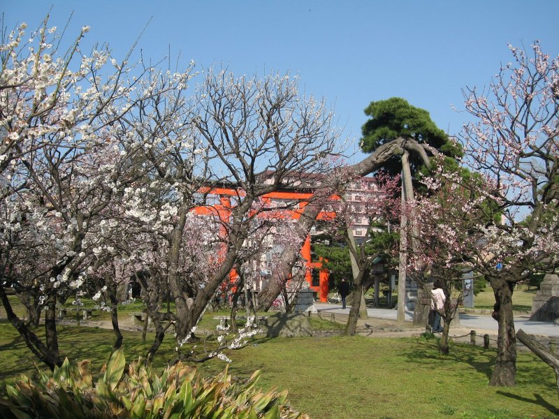 Plum blossoms at Hakusan Park