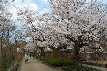 Takaoka Castle Park Sakura Festival