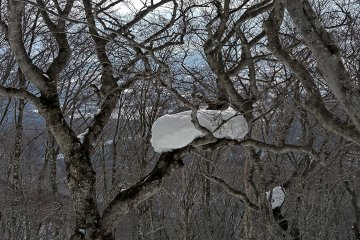 Nature creates lovely designs in winter