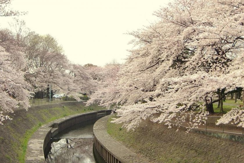 The tree-lined river here is stunningly beautiful