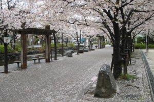 Sakura season at Ninoe Sakura Park