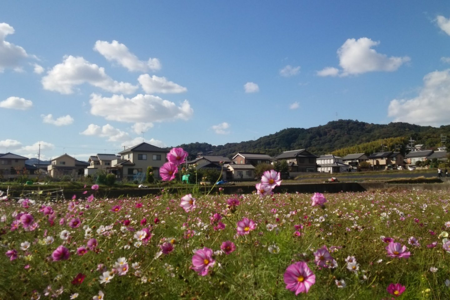 Kinryu Park is extremely easy to access!