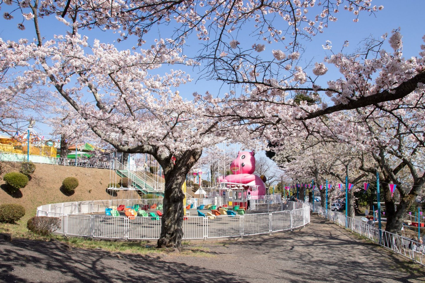 Around 1000 cherry trees cover the grounds at Kamine Park