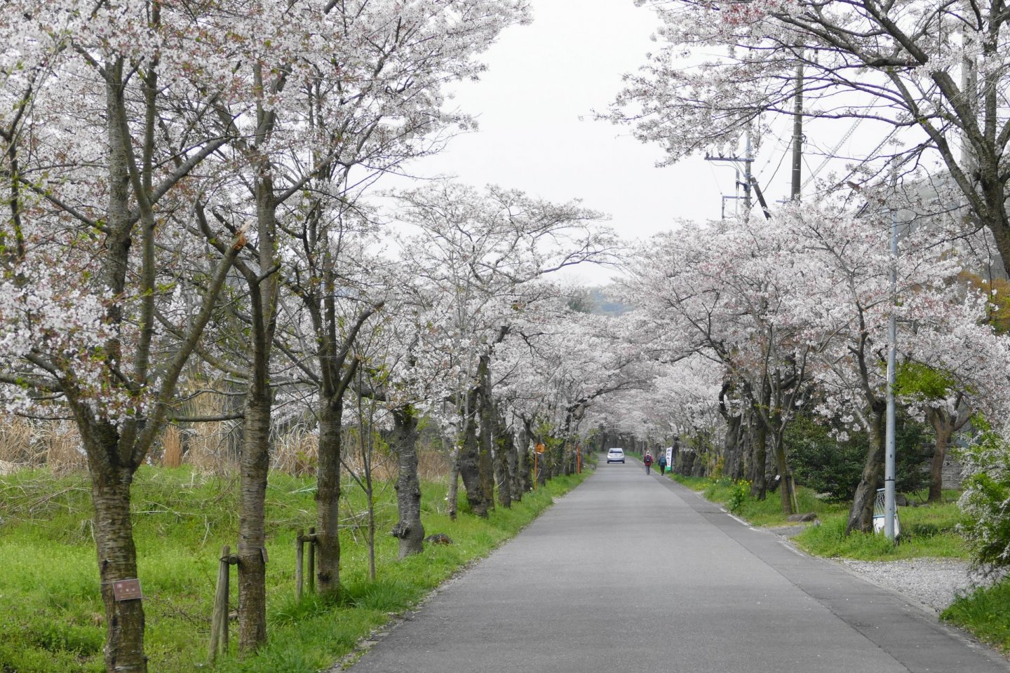 The tree-lined road approaching the park