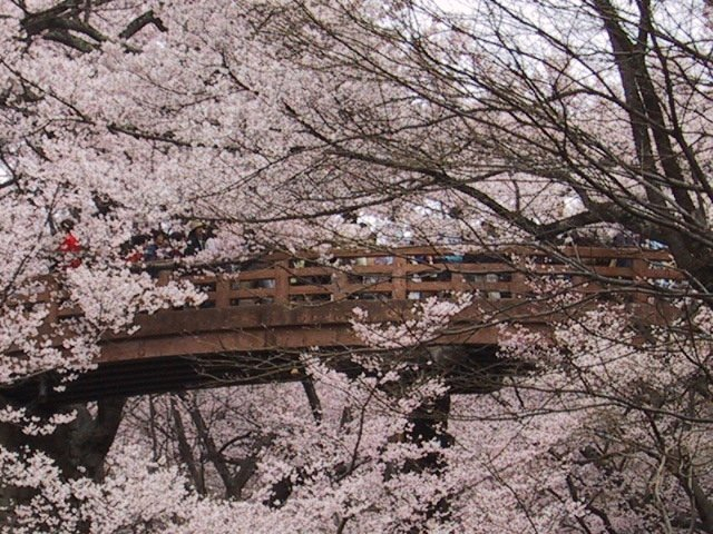 Blossoms everywhere!
