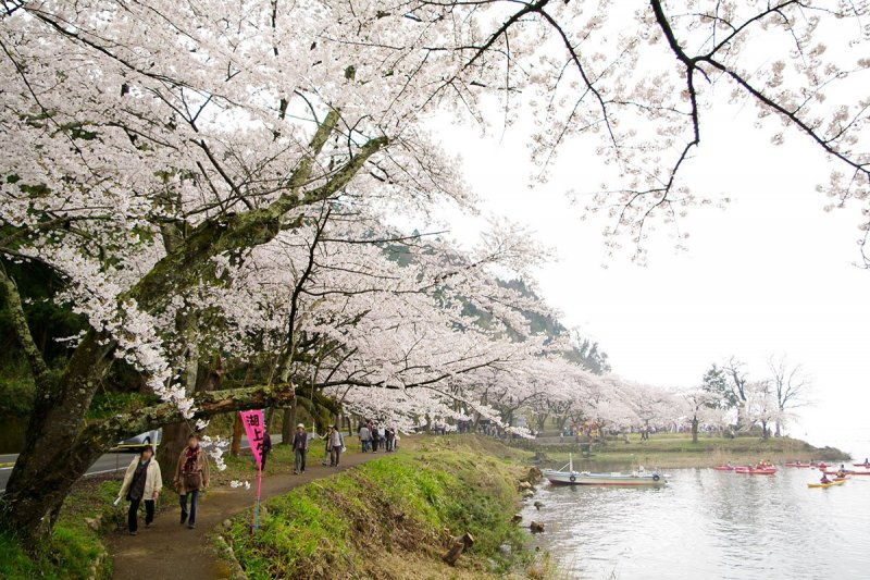 Spring's beauty in Shiga