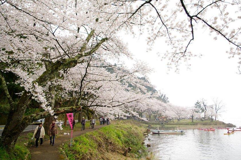 Spring\'s beauty in Shiga