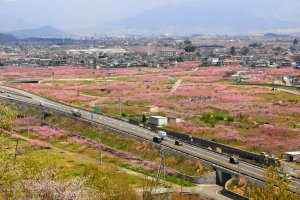 The Fuefuki area of Yamanashi is renowned for its spring color