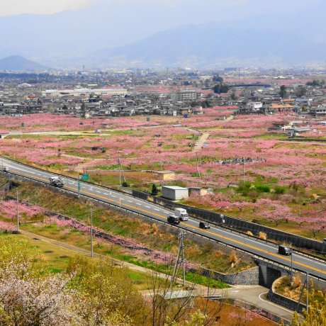 Fuefuki Spring Festival