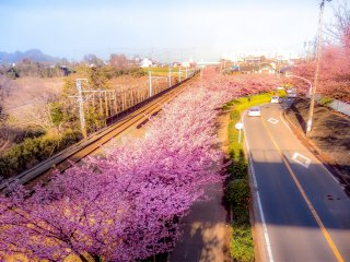 Close by to Komatsugaike Park you can enjoy a bird's eye view of the cherry blossoms