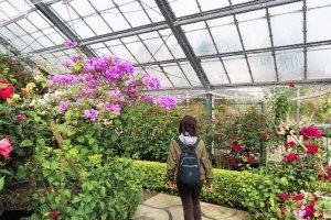 Hakone Gora Park Greenhouse