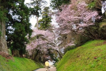 Walkway at Onshi-Hakone Park