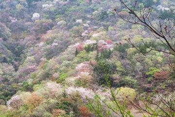 View from Hakone Tozan Train