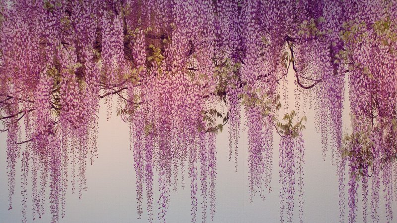 One of Yoshimura Yoshio's iconic works
