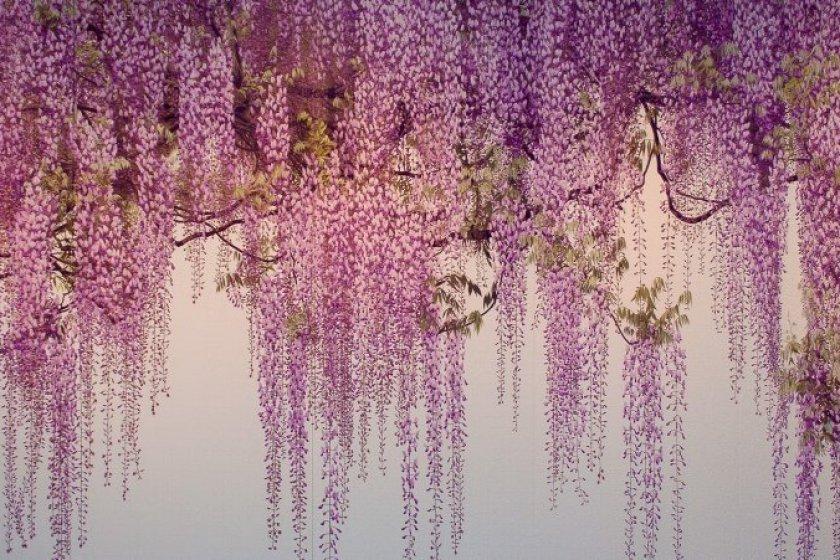 One of Yoshimura Yoshio\'s iconic works