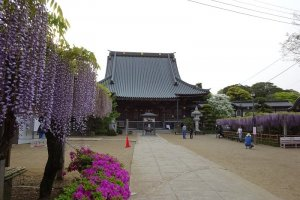 Purple tones at Myofukuji