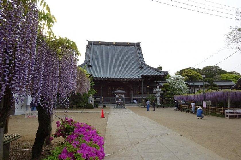 Purple tones at Myofukuji
