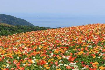 A stunning scene in Hyogo Prefecture