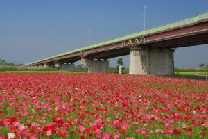 "Konosu City often gets referred to as ""flower town"" - with good reason!"