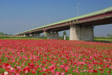 """Konosu City often gets referred to as """"flower town"""" - with good reason!"""