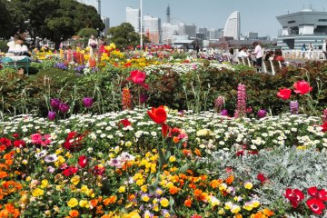 Yamashita Park flowers