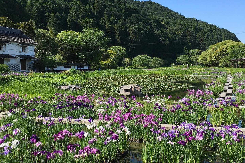 Irises at the Kamosō Kachōen Garden Park