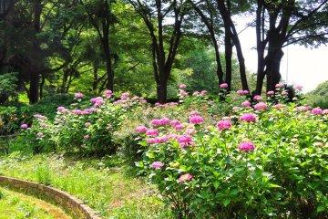 Yokohama Children's Botanical Park upper trail