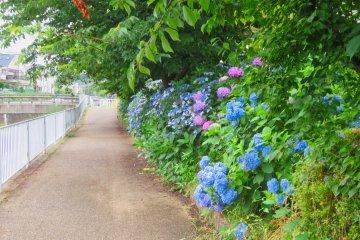 Hiradongaya River near Hirado