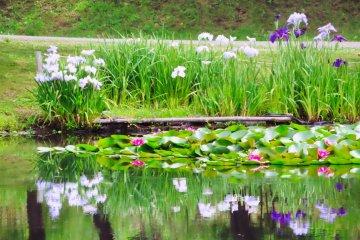 Odawara Flower Garden Iris and Water Lilies