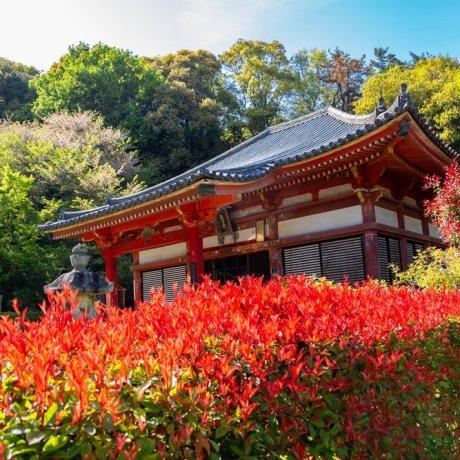 The Shikoku 88 Temple Pilgrimage