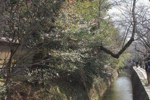 疎水の水は清い。疎水沿いには豊かな植生がにぎわう