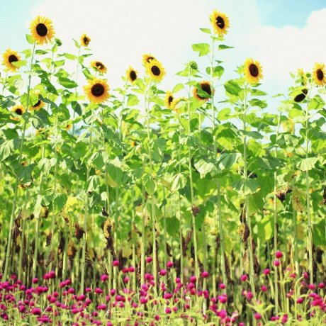 Summer Garden Fest