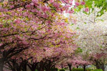 Cycling in Kawagoe Park