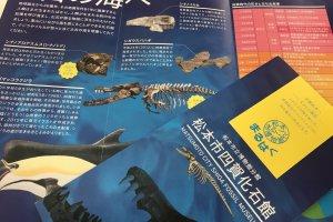 Красочные памфлеты музея