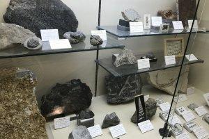 Экспозиция ископаемых