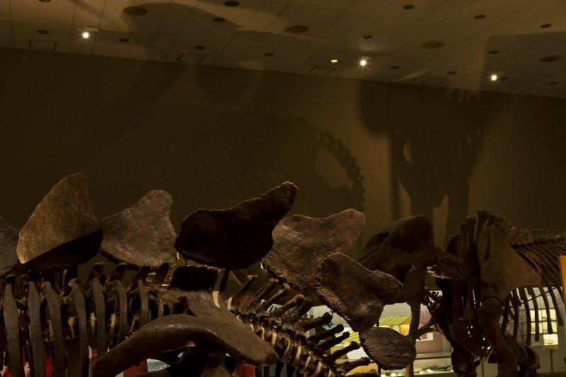 Osaka Museum Of Natural History Fee