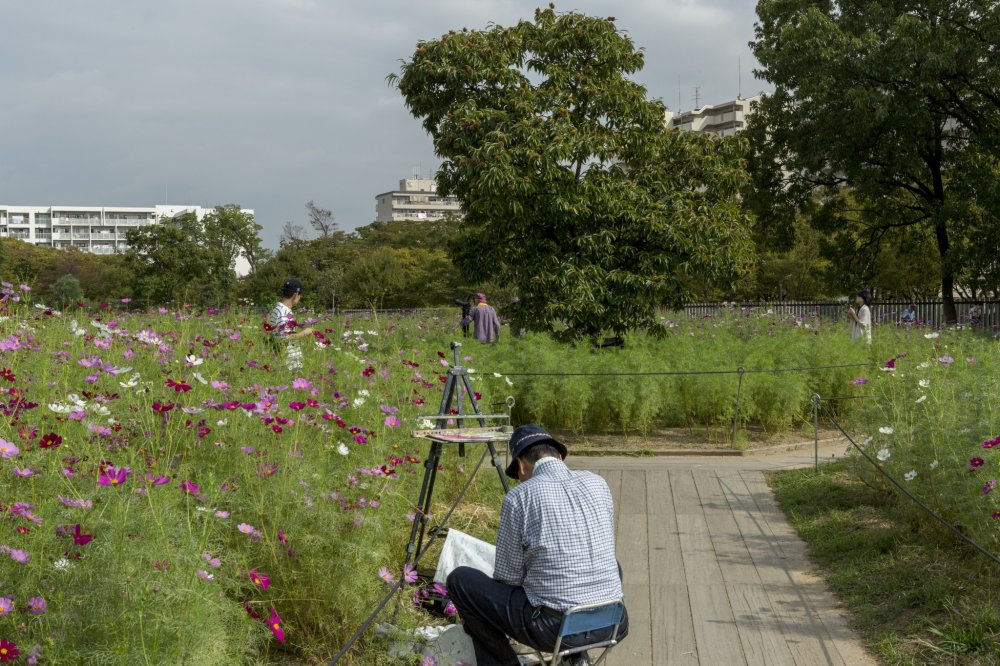This cosmos garden was a popular place for photographers and painters alike