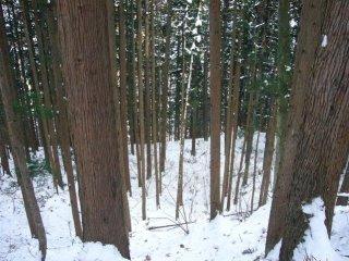 Прогулка по лесу занимает  минут