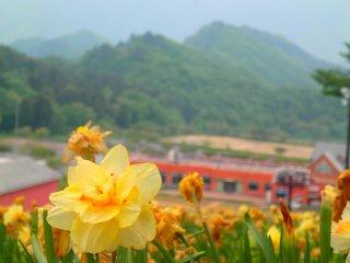 Bunga musim semi terakhir