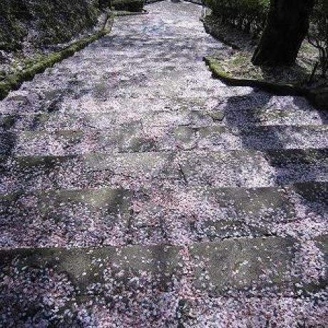 福井県鯖江市「西山公園」