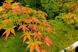 Belas folhas de outono