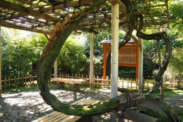 The Wisteria Trellis, a shaded pavillion where one can rest.