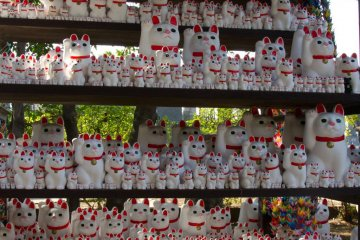 An army of cats