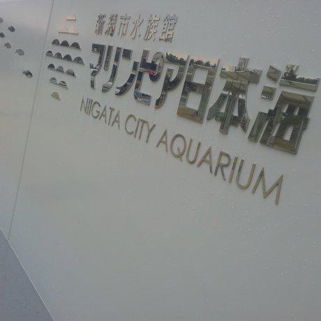 Marinepia, công viên hải dương thành phố Niigata