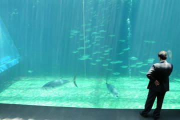 Located in Onahama Port, the aquarium was designed to 'emphasize the vastness of the ocean'.