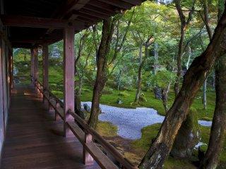 El jardín Zen visto desde el pórtico del Hojo